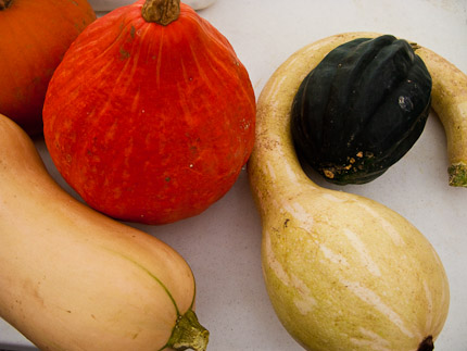 Schrambling_100912_winter squash in zucchini season_-24