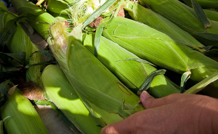Schrambling_100917_corn not for syrup-6-2