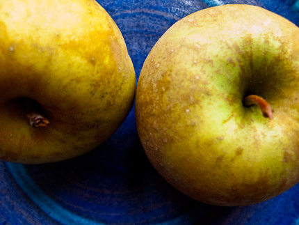 Schrambling_101027_russet apples heirlooms-10