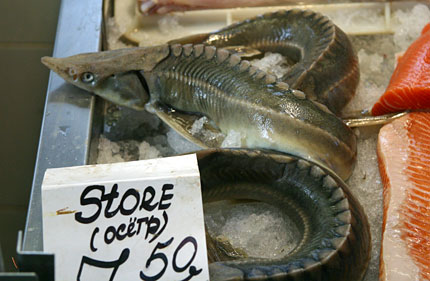 sturgeon in the riga market