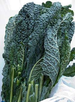 Schrambling_tuscan kale as lettuce -4773