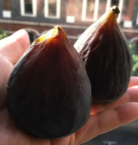 California-figs-essny