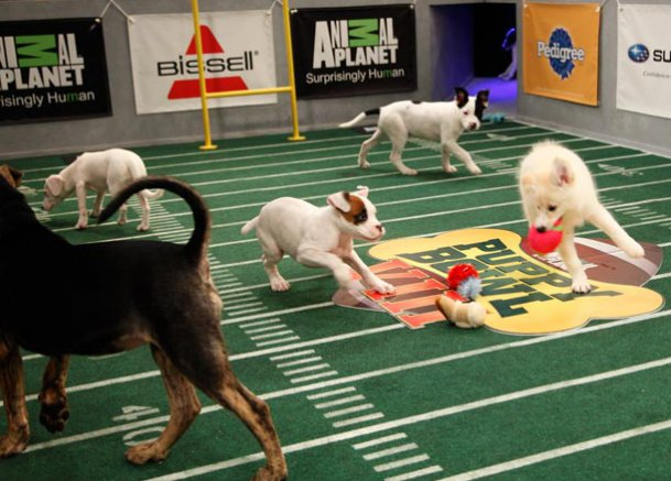 Puppy-bowl-photos-03-625x450-1