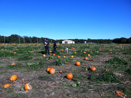 Pumpkin-picking-essny
