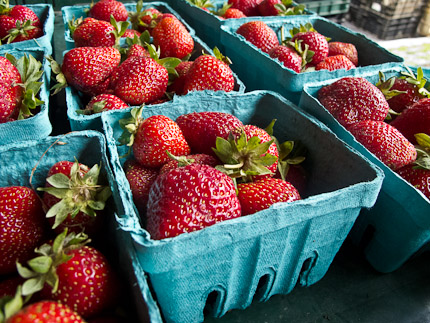 Schrambling_ray bradley strawberries 97th street greenmarket-1425