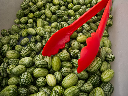Schrambling_mexican gherkins-4781