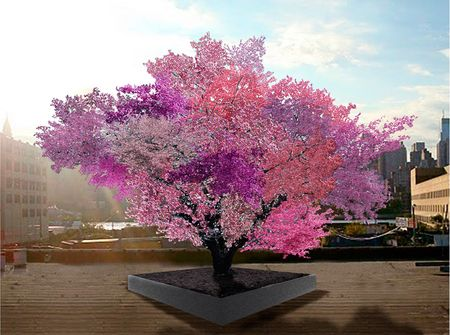 TREE-OF-40-FRUIT-SAM-VAN-AKEN