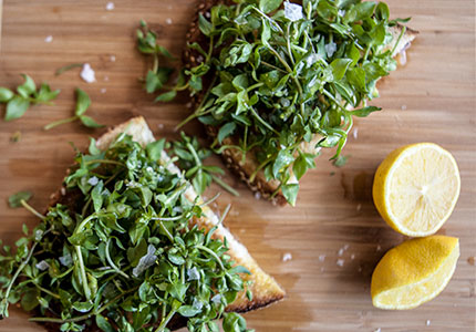 Chickweed Bruschetta1-jpeg
