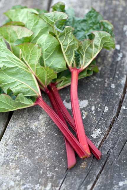 Rhubarb-stalks-and-leaves430