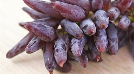 L_5828_Witch-Finger-Grapes