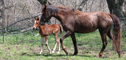 Filly_2