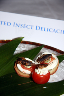 Explorers_club_assorted_insect_deli