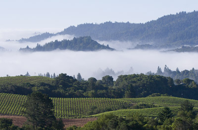 Sonoma_vineyards_with_mist