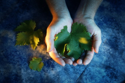 Hands_holding_grape_leaves